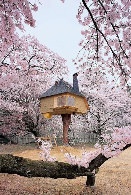 Teahouse Tetsu in Yamanashi, Japonya